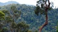 Borneo Hutan Tersisa
