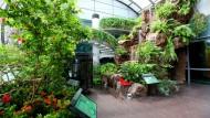 Konservasi Alam Di Bandara Changi Singapura