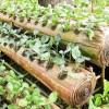 Berkebun Sayuran di atas Batang Pisang
