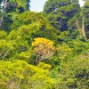 Selamatkan Kayu Indonesia