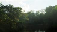 Kuswata Kartawinata PhD: Diversitas Ekosistem Alami Indonesia