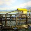 Indonesia Aquaculture 2014 (1): Keramba Jaring Apung Bulat