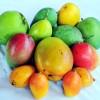 Potret Mangga Impor Di Tanahair