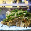 Aquascape Goes To Mall 2014