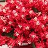 Bunga Plastik Secantik Aslinya