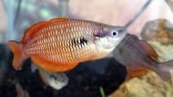 Selamat Datang Kembali Ikan Pelangi Papua