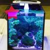 Bebeja Aquarama 2015 (4): Aquascaping Di Akuarium Nano