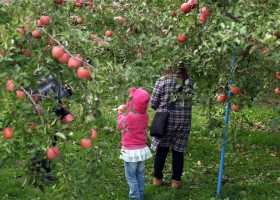Surga Apel Di Hirosaki Apple Park