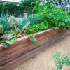 5 Kota Urban Farming Terbaik Di Amerika Serikat