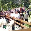 Kontes Domba Garut Piala Kemerdekaan 2016