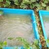 Kolam Fiber Ikan Di Pekarangan