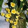 Bebeja Horti Fair 2017 (4): Khasiat Obat Anggrek Dendrobium