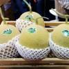 Bebeja Horti Asia 2017 (2): Melon Golden Emerald