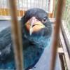 Sang Burung Master Tengkek Buto