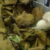 Manfaat Ganda Daun Jati Untuk Kelinci