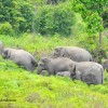 Tantangan dan Perlindungan Gajah Sumatera