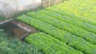 Kolam Air Di Kebun Sayur