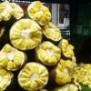 Nangka Legit Dari Bogor