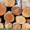 Hati-hati Menebang Pohon!
