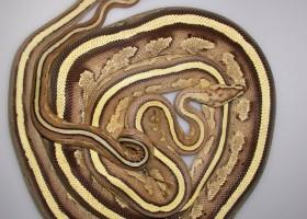 10 Reptil Paling Populer