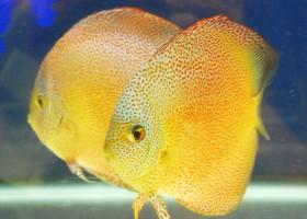 Cegah Ikan Hias Mati