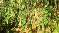 Sayangilah Bambu!
