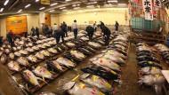 Bertandang Ke Tsukiji Fish Market
