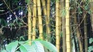 Bambu, Jawara Konstruksi