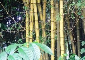 Bambu Jawara Konstruksi