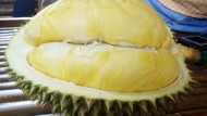 Durian Dan Alfred Russel Wallace