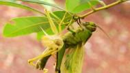 Pestisida Nabati: 4 Resep Pilihan