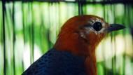 Burung Berkicau 100.000 Kali