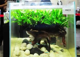 Planted Tank Gaya Baru Akuarium