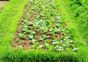 Hidup Sehat Pangan Organik