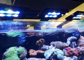 Manajemen Air Akuarium Laut