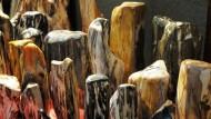 Sejarah Fosil Pohon