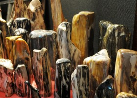 Rekam Jejak Fosil Pohon