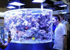 Beli Biota Akuarium Laut