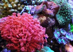 Kontestan Akuarium Air Laut Aquarama 2013