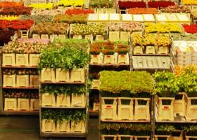 Flora Holland Trade Fair 2013