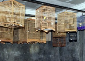 Sekolah Burung Berkicau