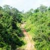 Asa Lestari Hutan Harapan Jambi