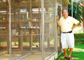 Vichai Pinyawat The Legend of Birds