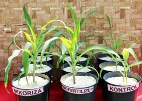 Manfaat Mikoriza & Biofertilizer