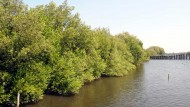 Save Our Mangrove Ecosystem!