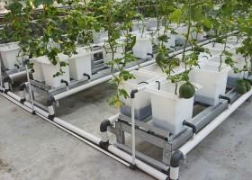 Melon Hidroponik Sistem Dutch Bucket