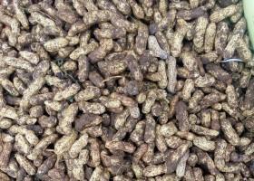 Cegah Cendawan Kacang Tanah