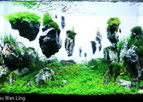 Floating Rocks Aquascaping