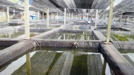 Saigon Aquarium Farm Ikan Hias Terbesar Di Vietnam