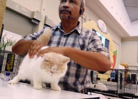 The 1st Annual Indonesia Pet Expo 2015
